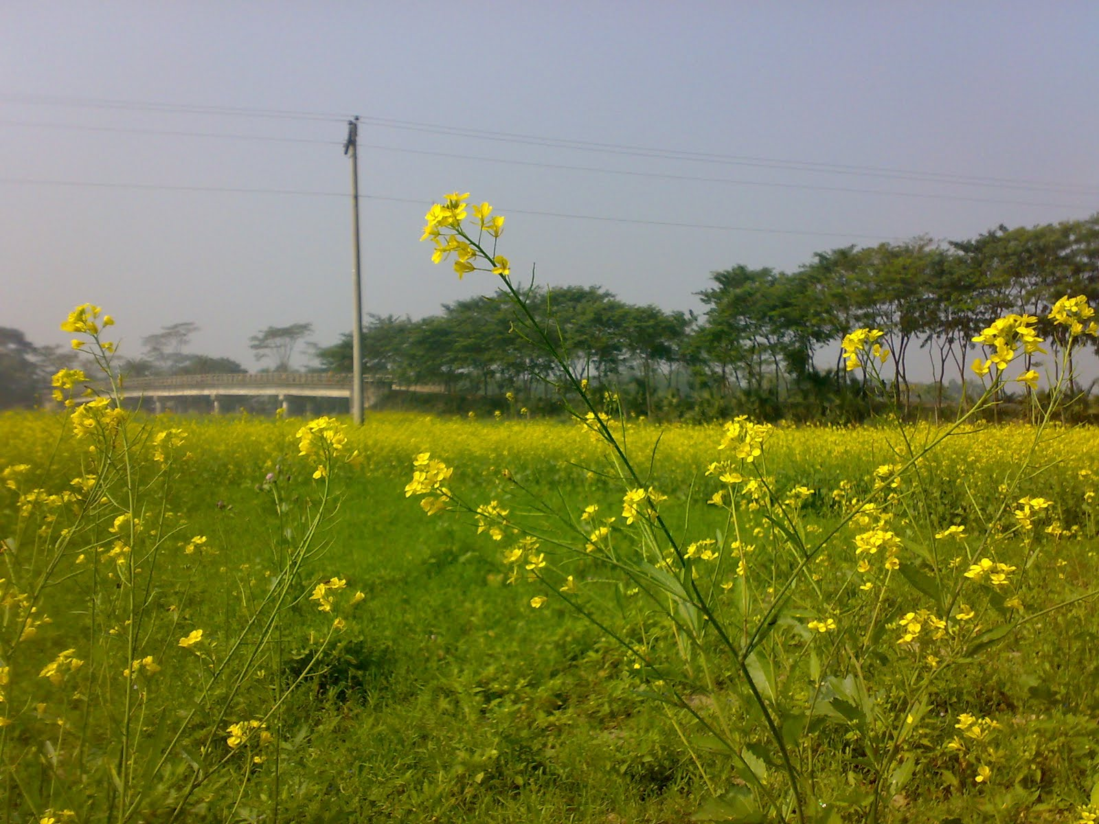 Nature of Bangladesh