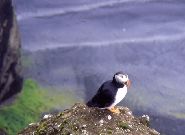Frailecillos (Islandia)