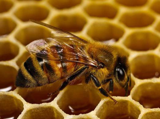 मधुमक्खी के डंक का इलाज