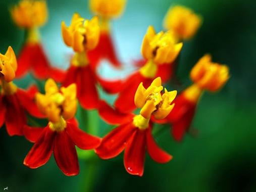 , dan jangan lupa lihat juga Foto Bunga Mawar dan Foto Bunga Melati