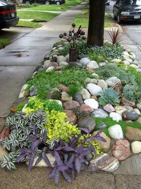 Backyard plants dreaming gardens for Low care garden plants