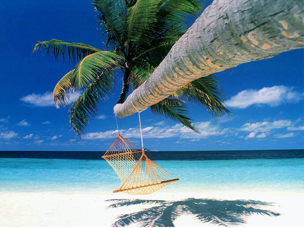 http://3.bp.blogspot.com/-HyCjJZYMBRw/TjVFUhKKS9I/AAAAAAAABNQ/wnSF_EKK8Vk/s1600/summer-coconut-tree-nature.jpg