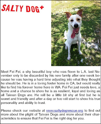 Freckles the Dog Salty Dog Rescue