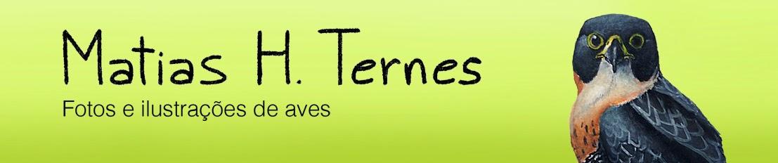Matias H. Ternes