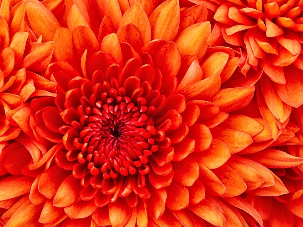 bunga yang mekar