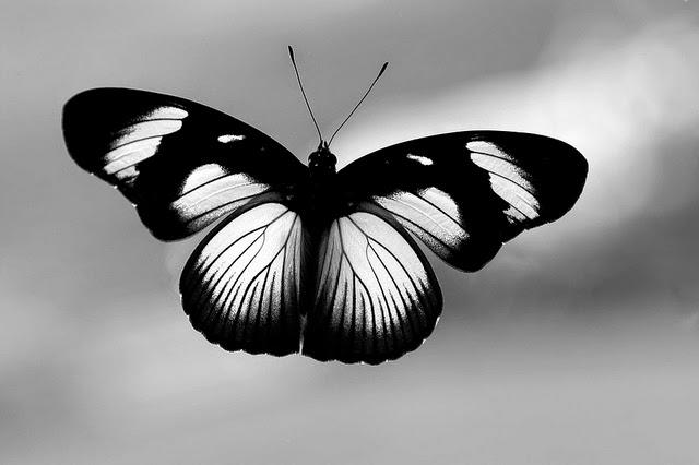 Belajar dari kupu-kupu