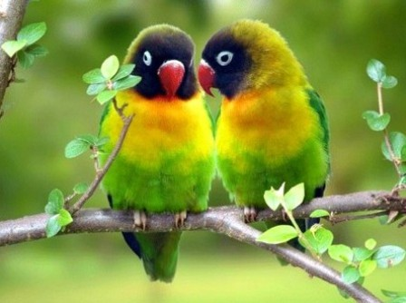 Beautiful Birds Wallpapers4