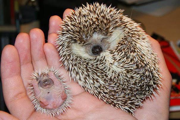 animal and their adorable mini-me 13