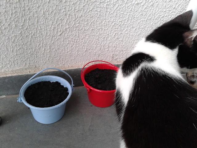 cat vida de gato