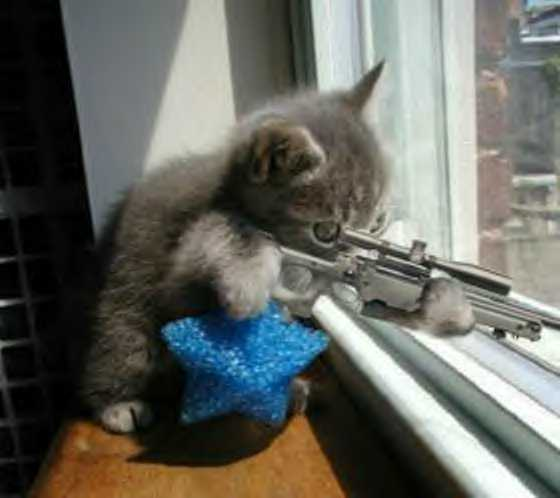 Funny Cats With Machine Guns