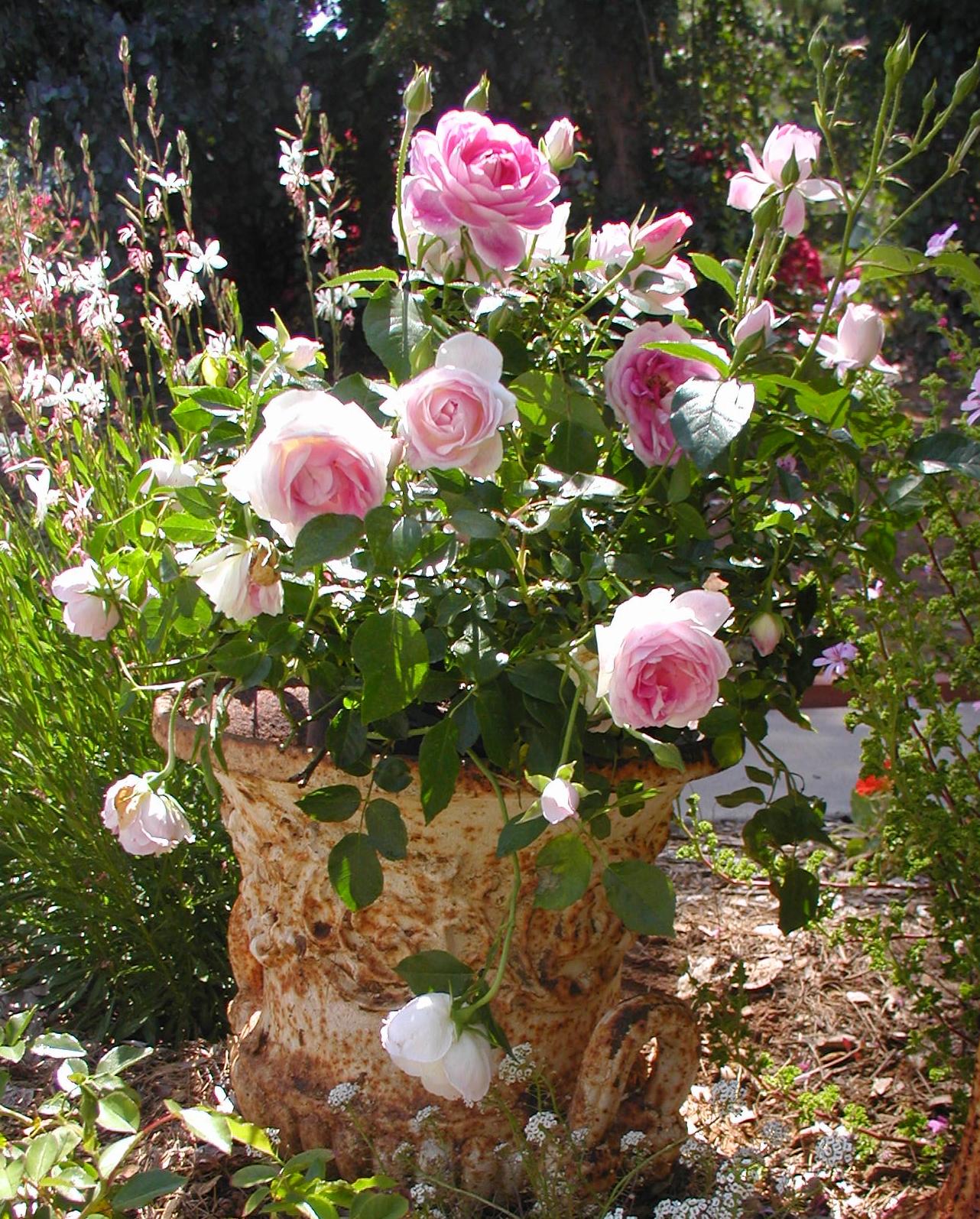 Chateau De Fleurs: April Showers Brought May Flowers