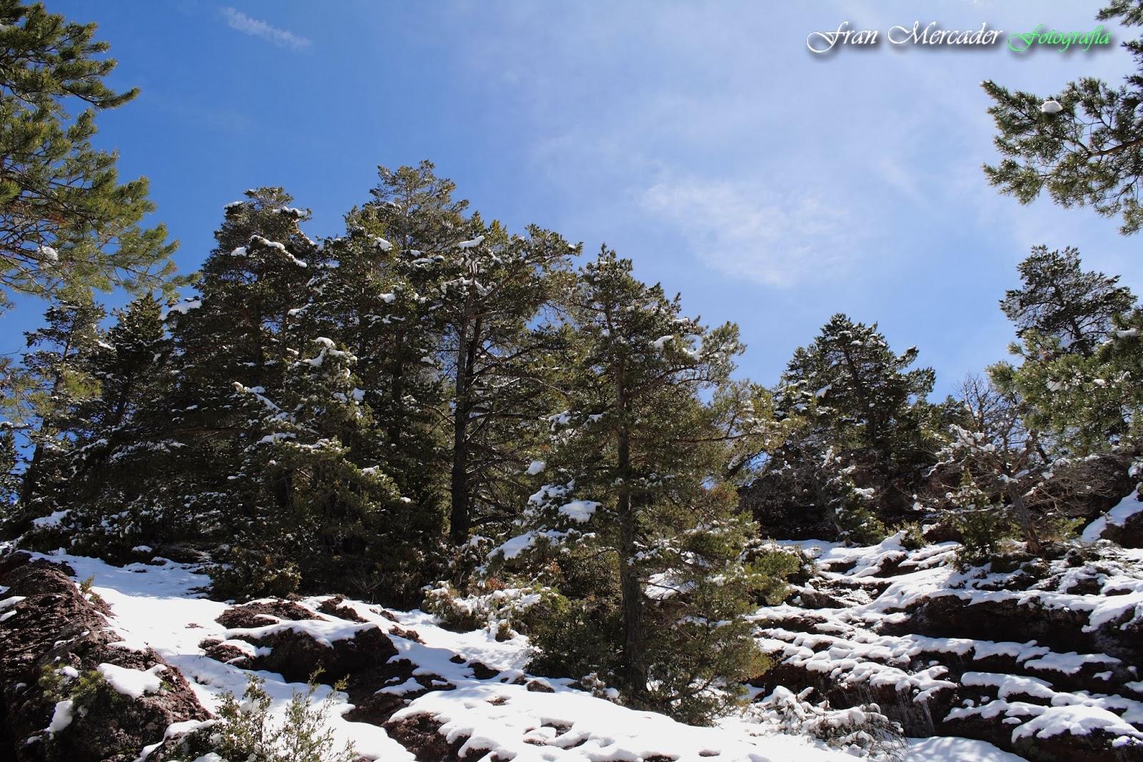 Parque Natural del Cadí-Moixeró (Catalunya)   ambientologosfera