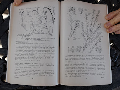 Books including on Flowers of the Southwest Deserts by Dodge and Janish. A page on Pluchea sericea.