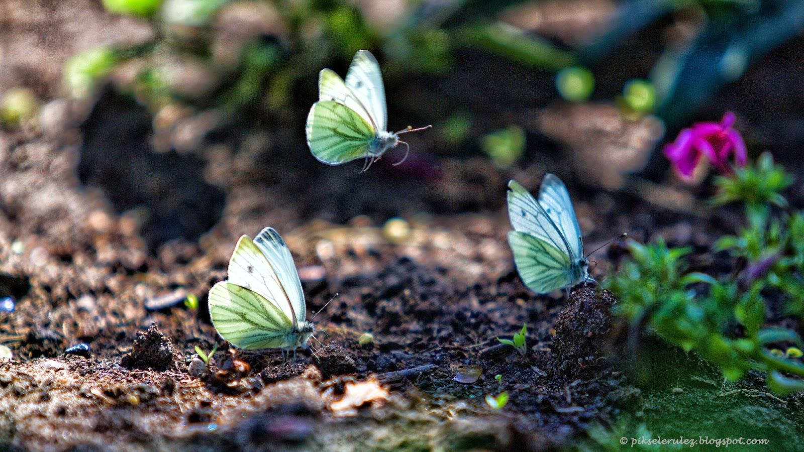 motyle, Bory Tucholskie, kolor, natura, Lotyń, Agata Raszke,