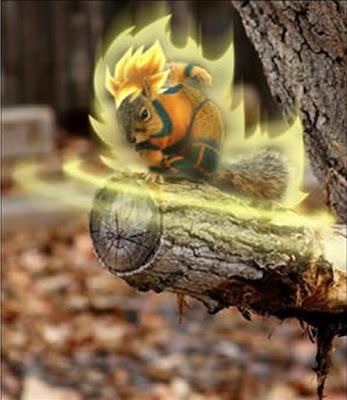 Ardilla Goku
