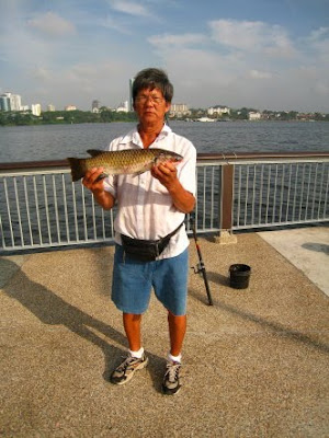 Squaretail Mullet also known as Chow Orh 草乌, 鯔魚 or Belanak Caught By Ah Bah weighing 2kg plus at Woodland Jetty Fishing Hotspots was created to share with those who are interested in fishing on tips and type of fishes caught around Woodland Jetty Fishing Hotspots.