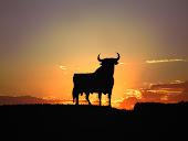 toro en la puesta de sol