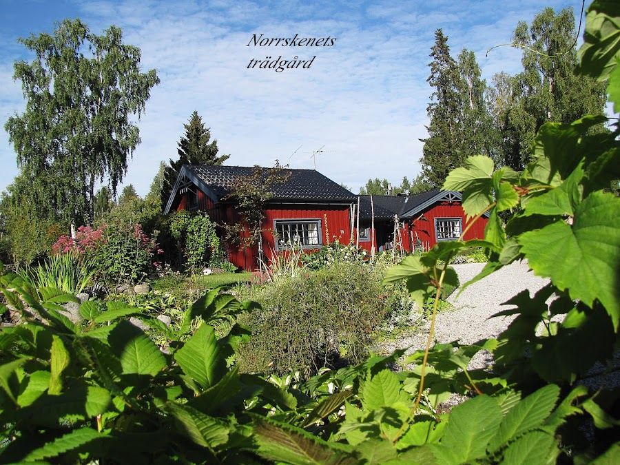 Norrskenets Trädgård