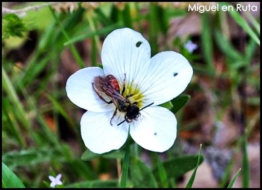 Insectos España