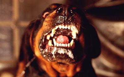 Pemilik anjing mati dibaham 25 ekor anjing belaannya
