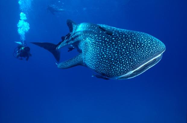 Uniq travel to australia new zealand the best coral - Ningaloo reef dive ...