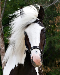 my favorite type of horse