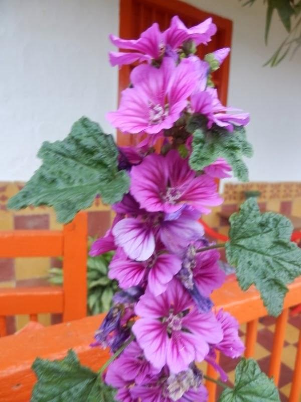 Flor La sonrisa de María