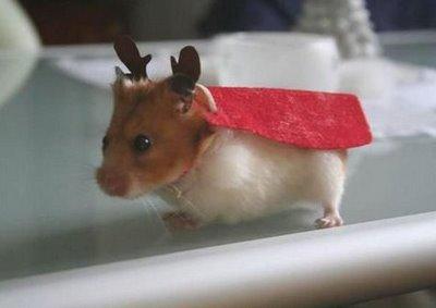 The hamster christmas deer