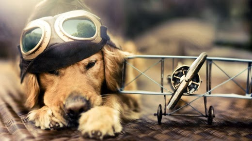 Tips for traveling with pets. by air