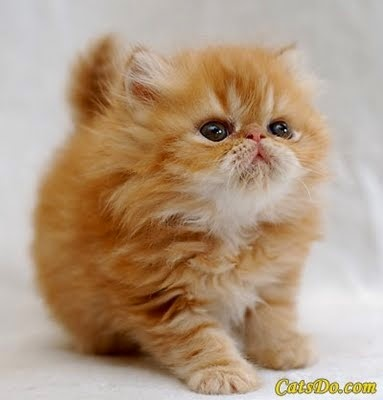 Photo chaton 1 mois orange