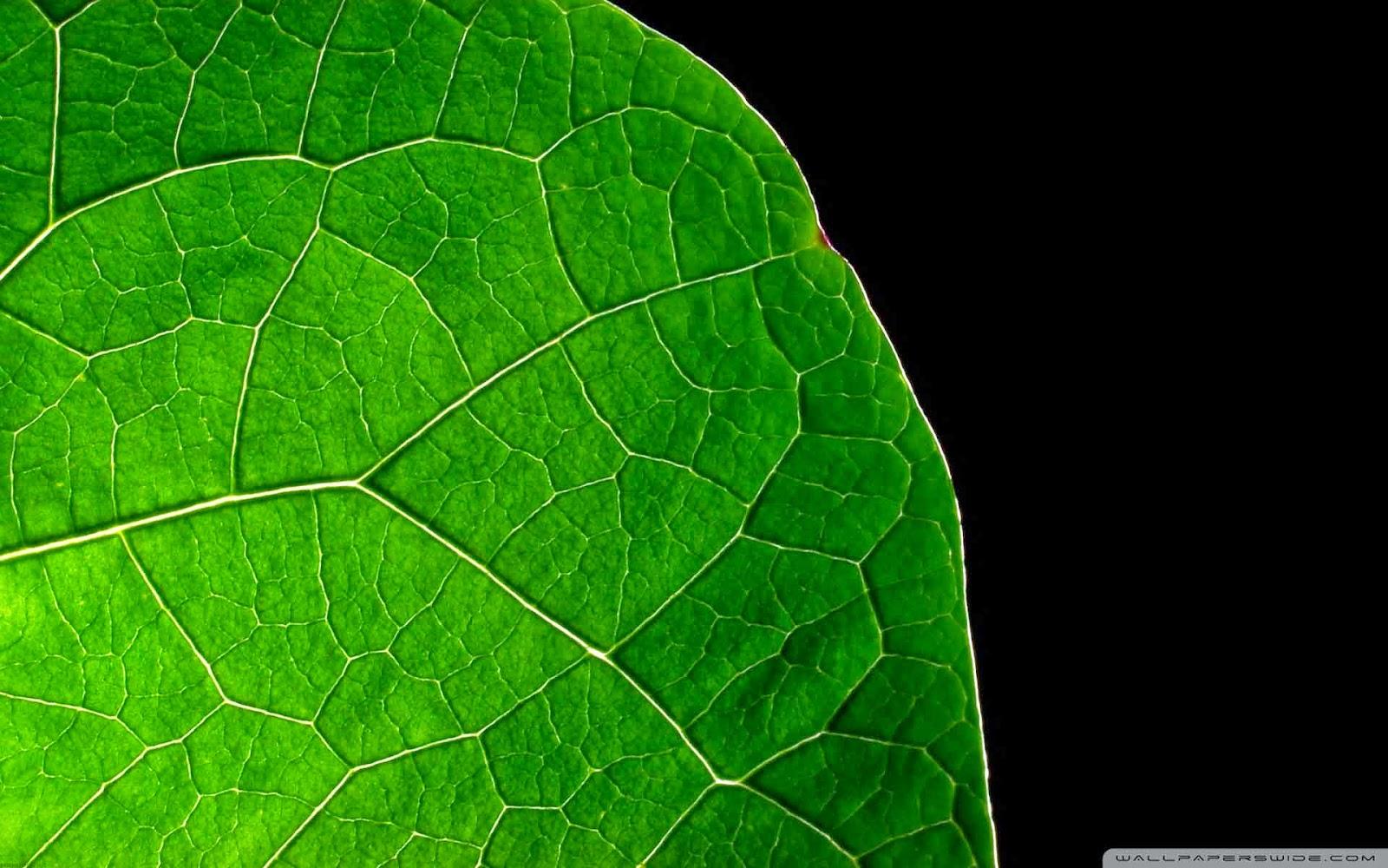 dark leaf wallpaper