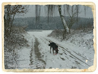 Winterspaziergang mit Boxer Amy
