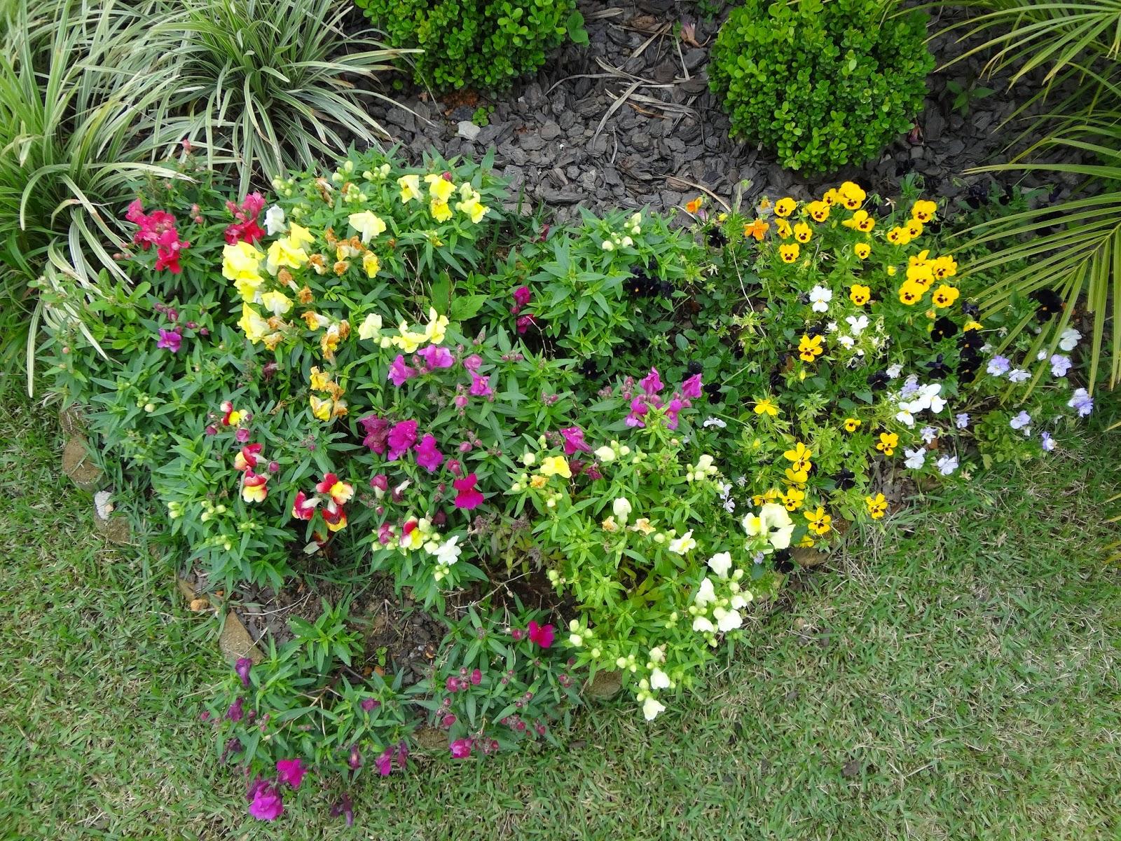 Também plantamos aipim, e algumas verduras E um jardim com flores