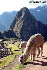 Visitando Macchu Picchu