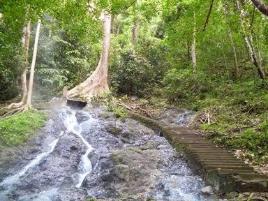 Pohon dan Sumber Air Panas Lejja
