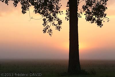 silhouette arbre contre-jour aube soleil brume campagne Seine-et-Marne