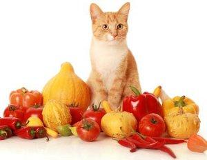 kennels  Receitas Caseiras de Comida de Gato