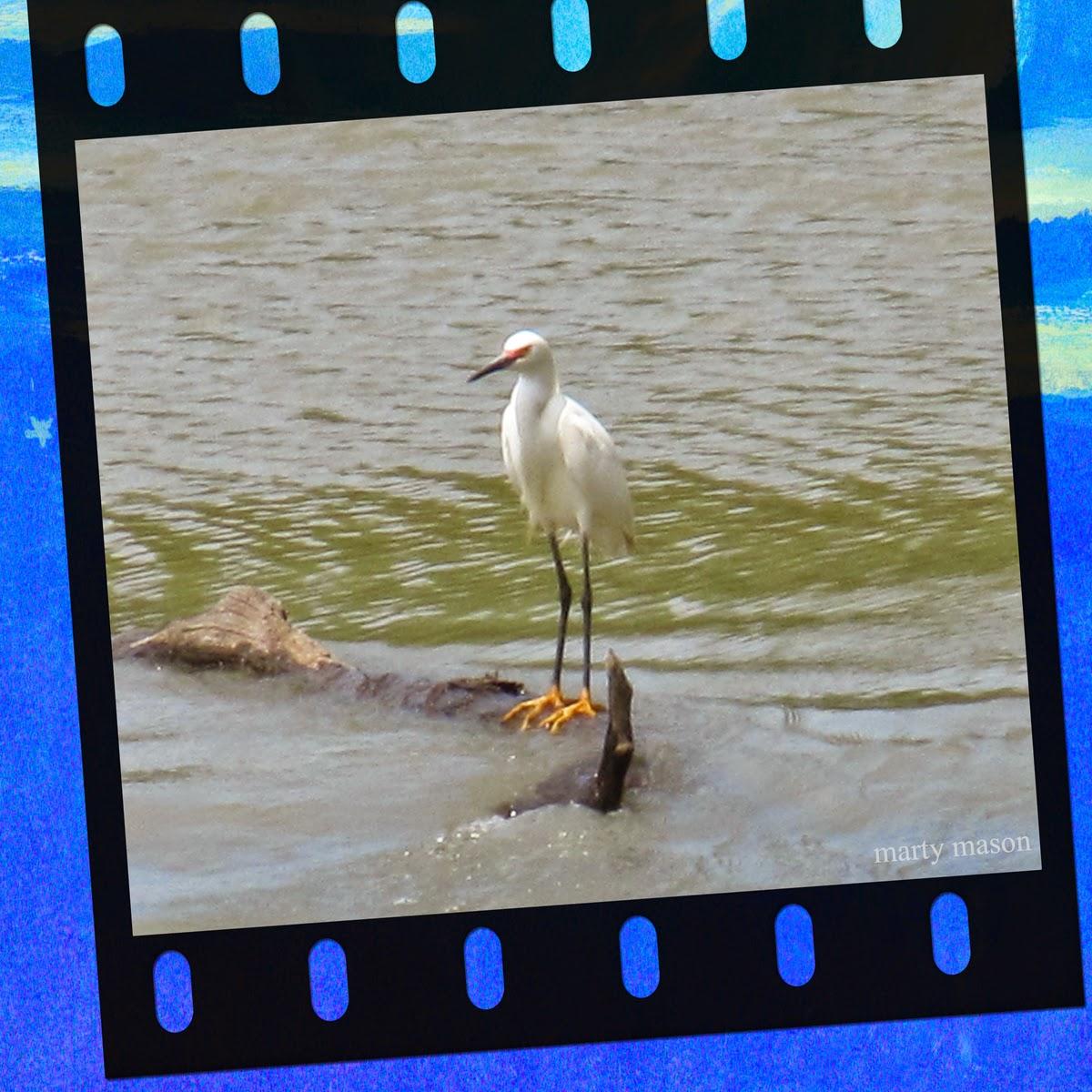 Crane on the Bayou Mason