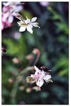 fleurs et bourdons