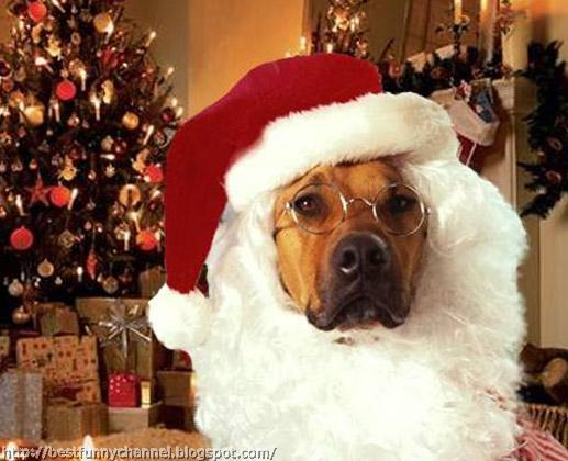 Dog Santa Claus.