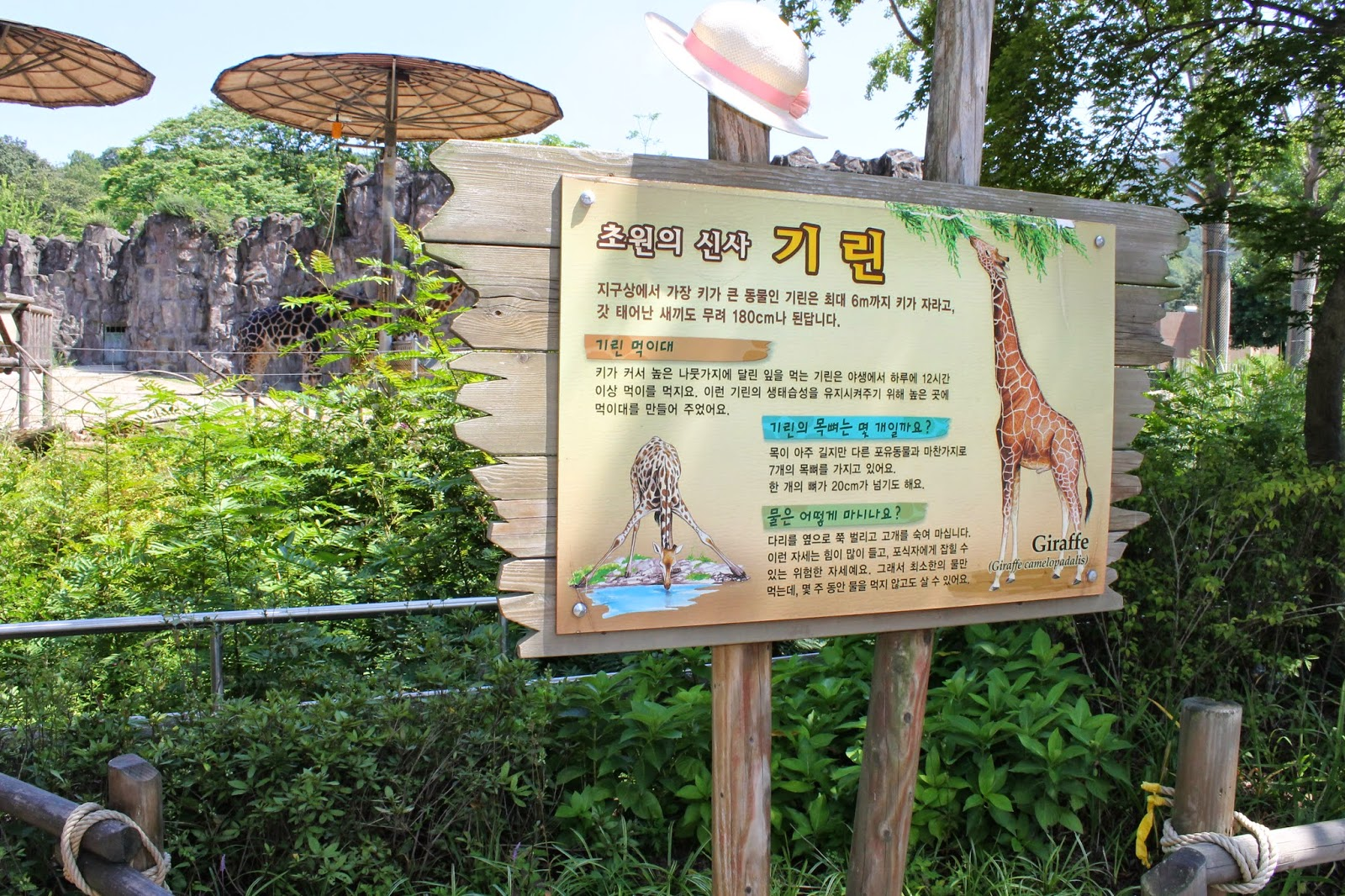 Seoul Zoo, Seoul, зоопарк в сеуле, сеул, корея, зоопарк