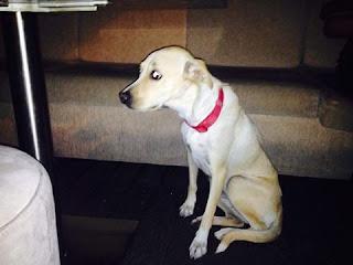 Βρέθηκε σκυλάκι στον Άλιμο στην Θεομητωρος. Το ψάχνει κανείς?
