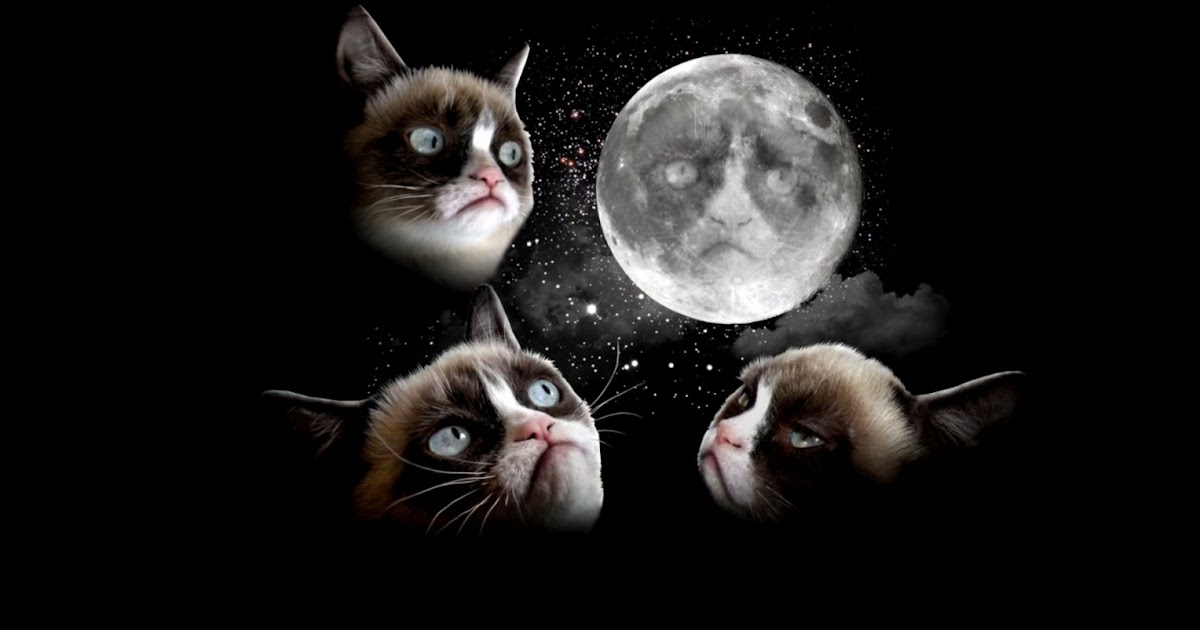 Grumpy Cat Moon Wallpaper