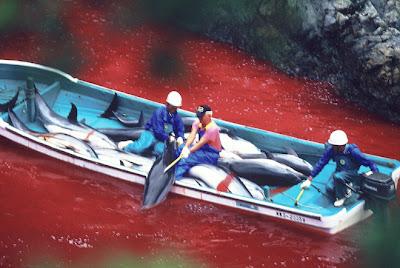 http://3.bp.blogspot.com/-I4-MX_fmXiA/UD_xISRgtdI/AAAAAAAAC9Q/qneBPBO_Rq0/s400/dolphin_slaughter_taiji_japan_the_cove_brooke_mcdonald_23.jpg