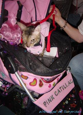 Pink Catillac