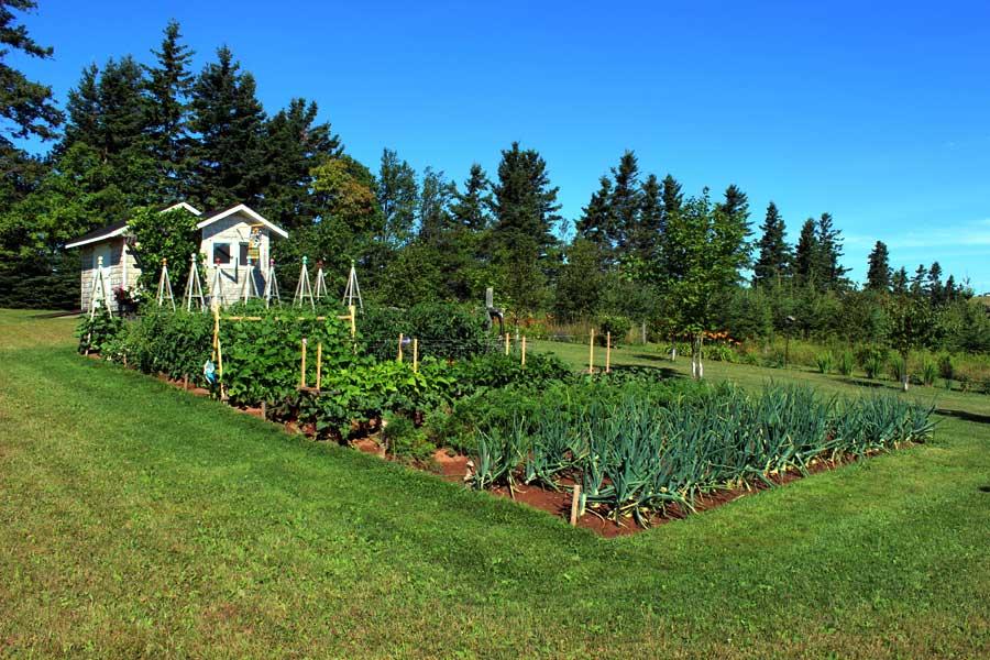 Vegetable-Garden.jpg (900×600) | VEGETABLE GARDEN LAYOUT | Pinterest