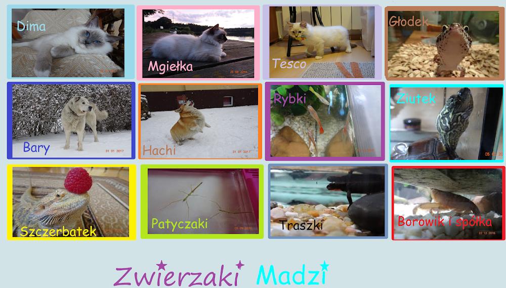 Zwierzaki Madzi