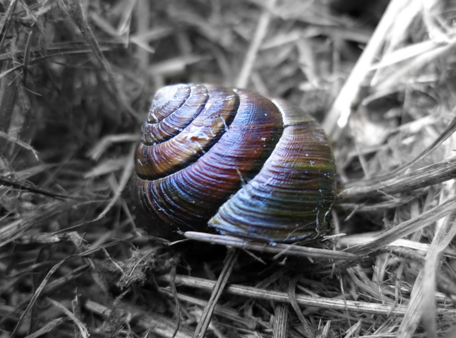 Oregon Coast Snail