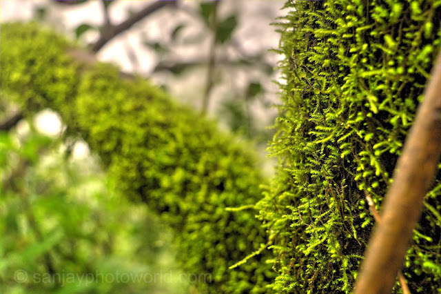 Jungle Tree Branch