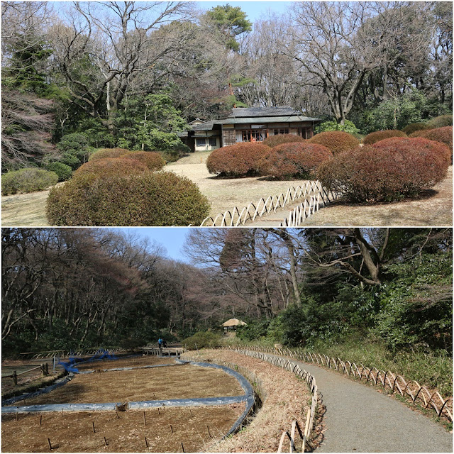 Serene garden view with the tea house in the beginning of Spring at Meiji Shrine in Tokyo, Japan